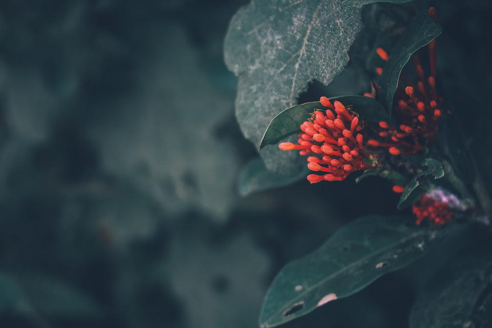 Nature, Flower, Pretty