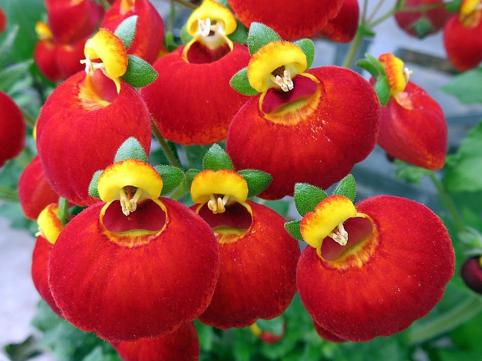 Nature, Flower, Red, Yellow, Strange