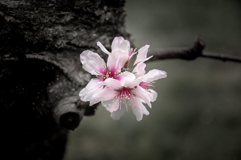 Flowers, Flower, Spring, Nature, Purple Flowers, Rosa