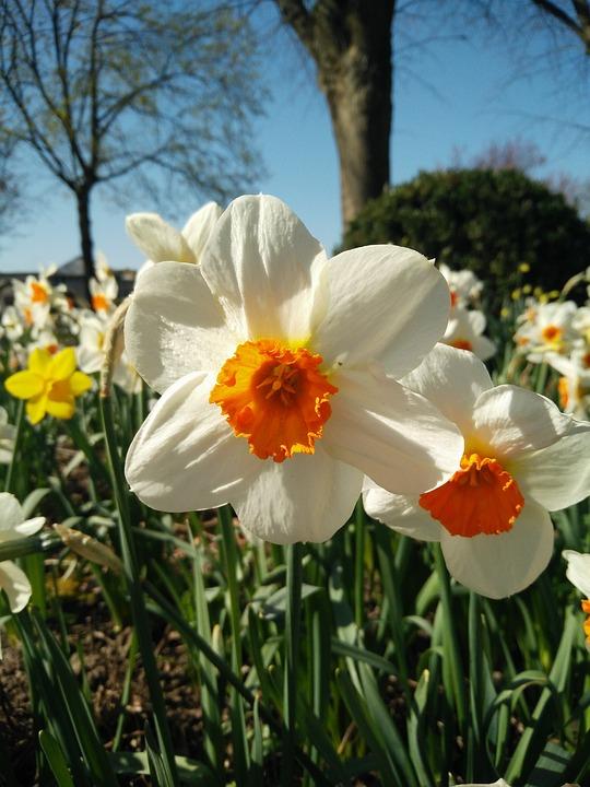 Flower, Nature, Plant, Season
