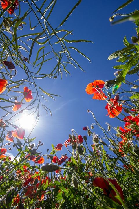 Nature, Leaf, Tree, Flower, Flora, Season, Garden