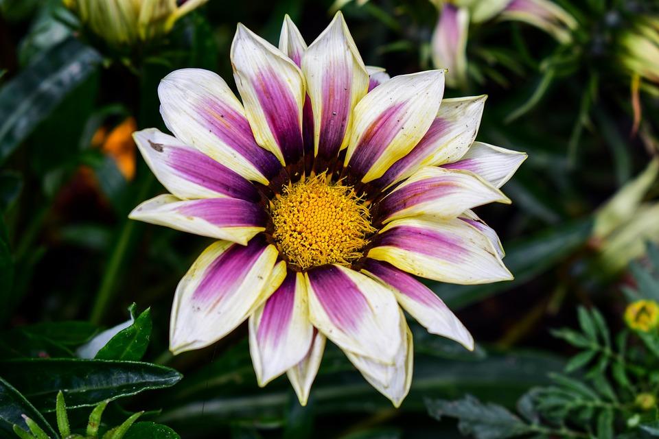 Nature, Flower, Plant, Summer
