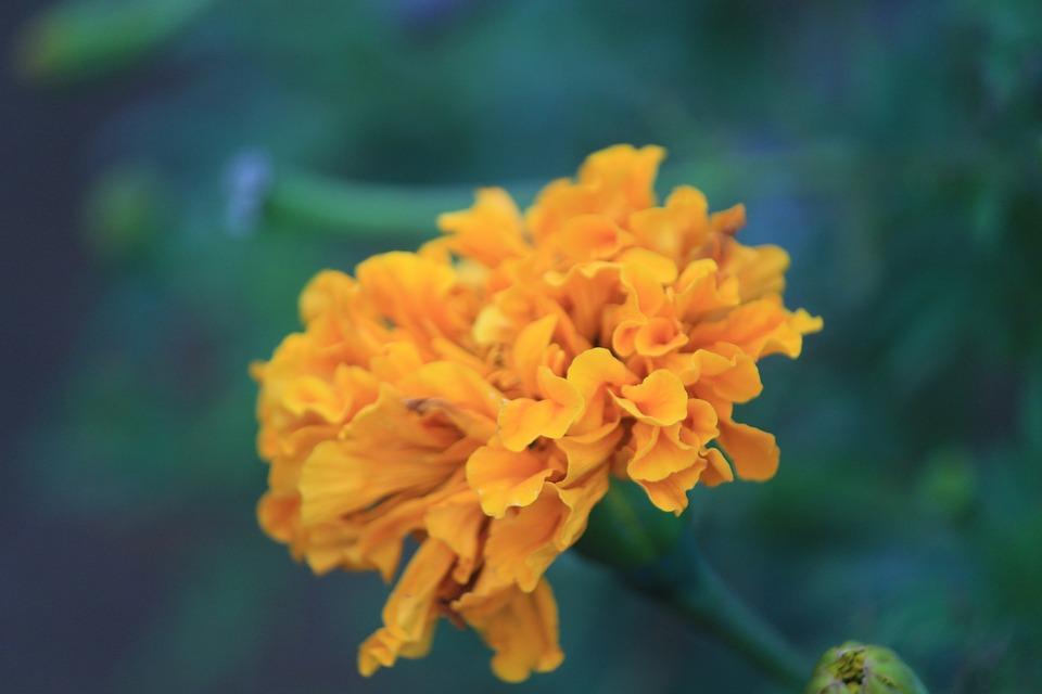 Flower, Nature, Yellow Flower