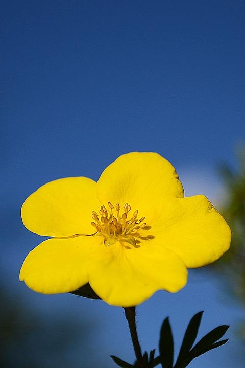Yellow, Nature, Flower, Plant, Petals, Stamens