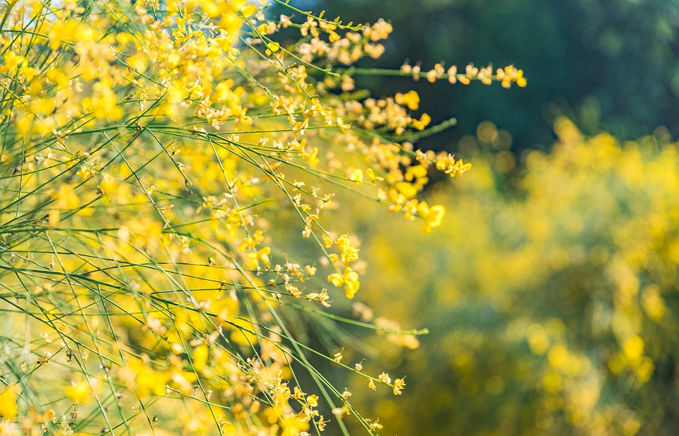 Flower, Yellow, Color, Summer, Open Country