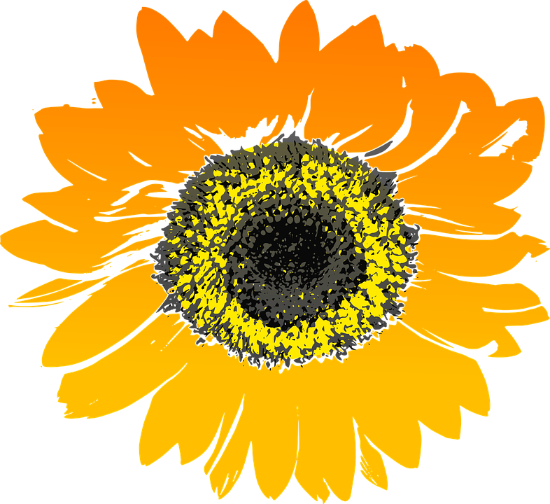 Sunflower, Flower, Yellow, Orange