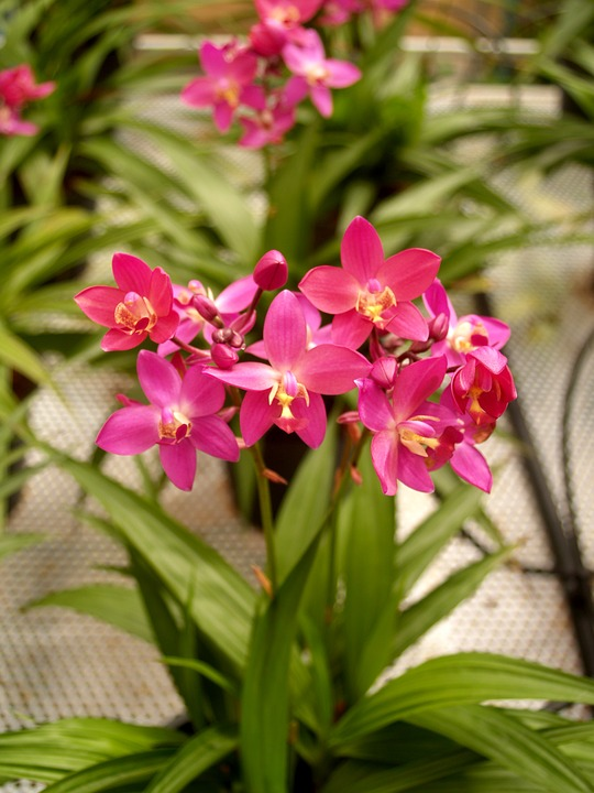 Orchid, Flower, Bright, Violet, Growth, Decoration, Bud