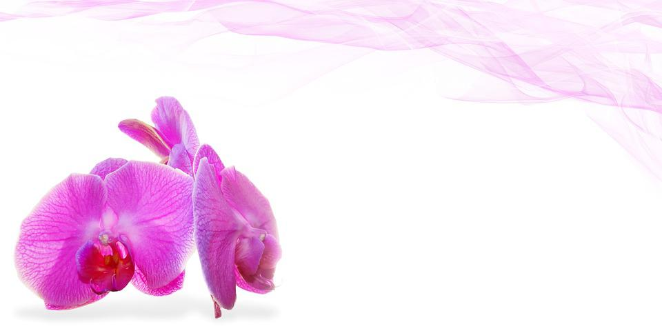 Wellness, Beauty, Flower, Deco, Plant, Massage, Orchid