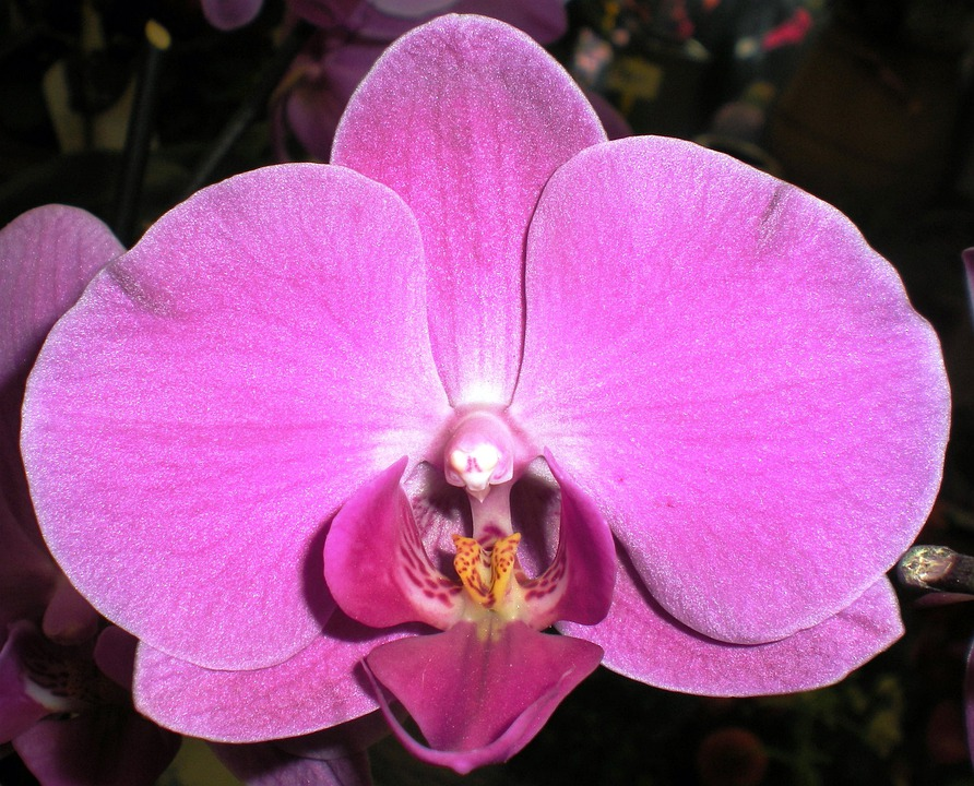 Orchid, Nature, Flower