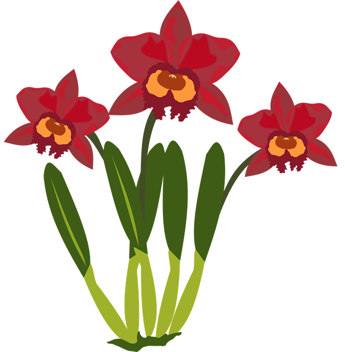 Clip Art, Flor, Flora, Flower, Nature, Orchid, Orchids