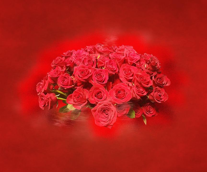 Flower, Color, Ornament, Background, Nature, Roses
