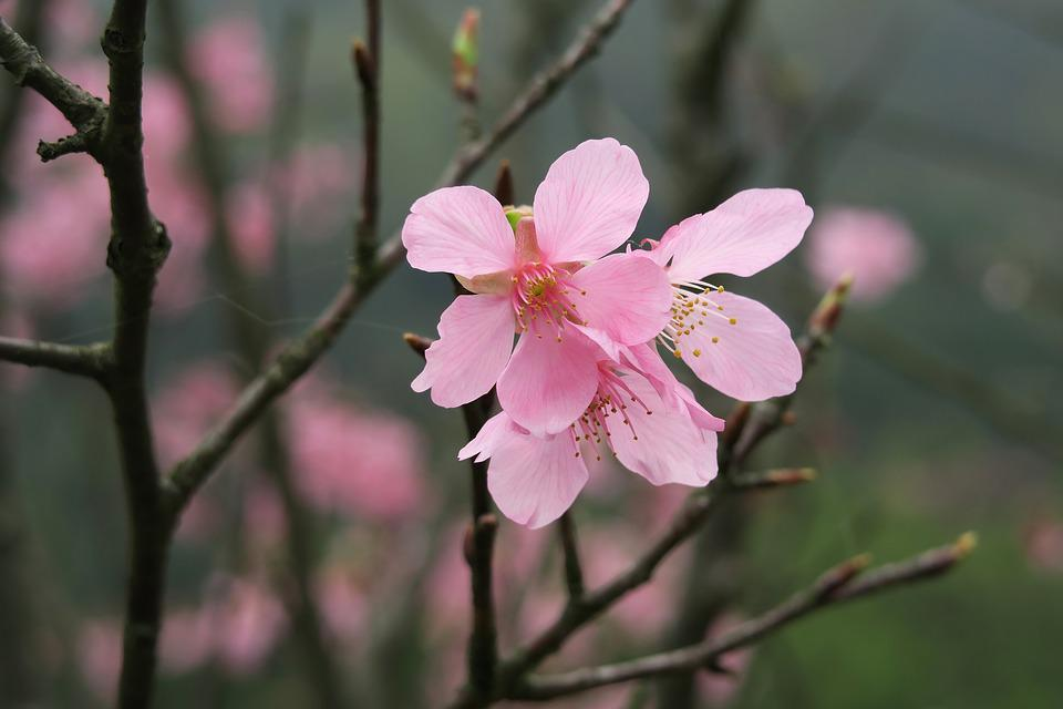 Flower, Nature, Plant, Outdoor, Tree