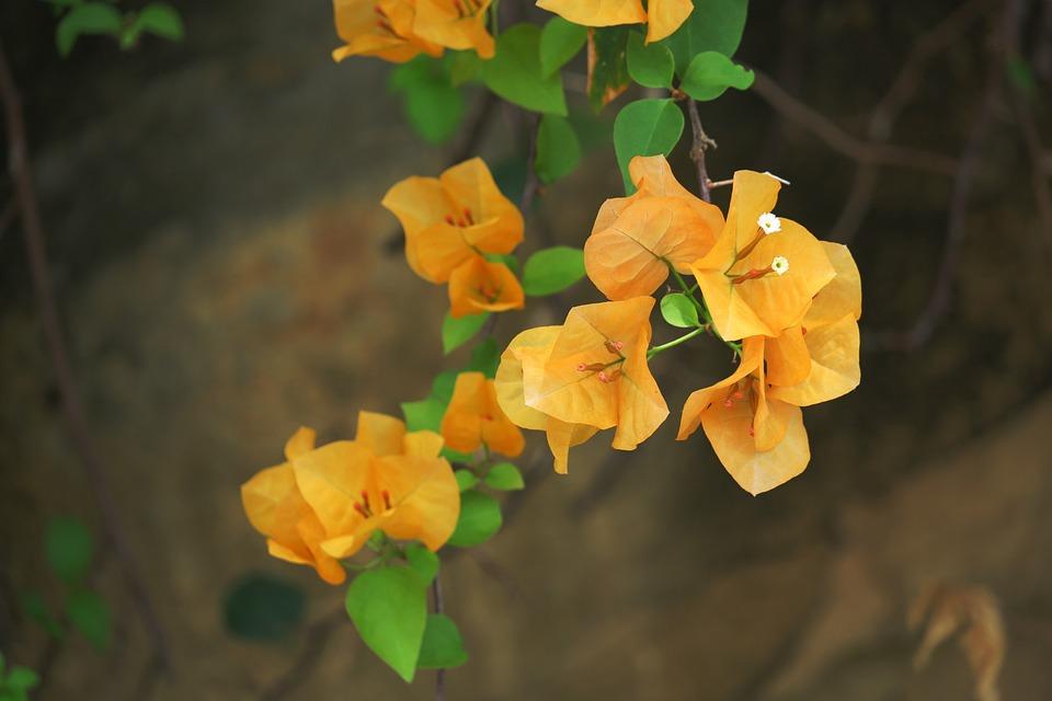 Flower, Plant, Nature, Leaf, Garden, Outdoor, Tree