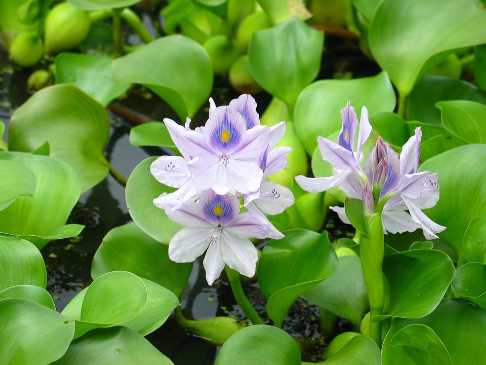 Pond, Plant, Flower, Park