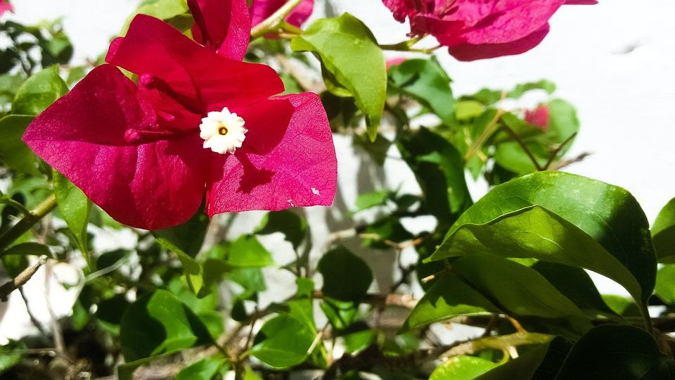 Flower, Rosa, Green, Autumn, Nature, Peace