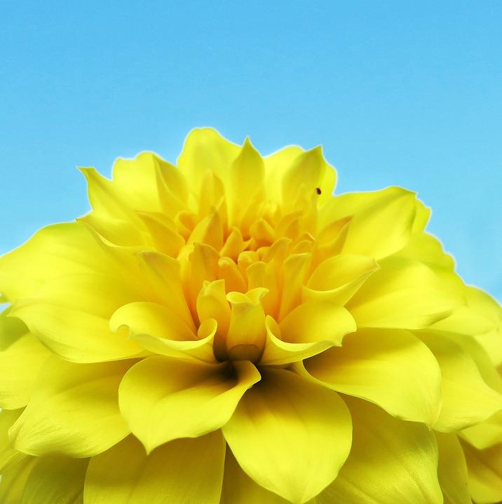Flower, Nature, Petal, Plant, Flower's, Peony, Bloom