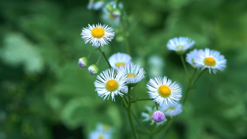 Nature, Flora, Summer, Flower, Petal