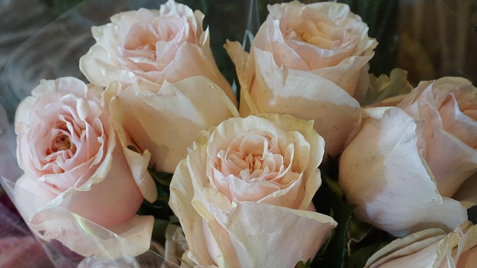 Flowers, Flower, Rose, Petal, Romance, Nature