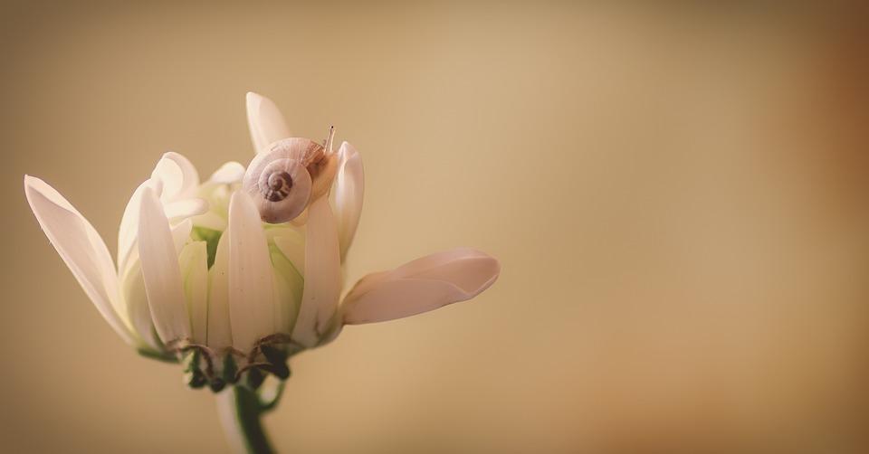 Flower, Snail, Beige, White, Soft, Petals, Macro
