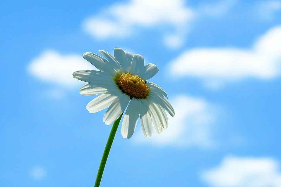 Flower, Sky, Clouds, White Flower, Petals, White Petals