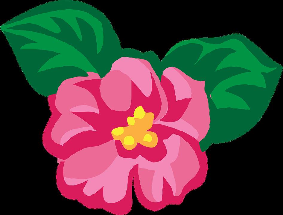 Flower, Spring, Pink, Petals, Plant, Purple, Leaves