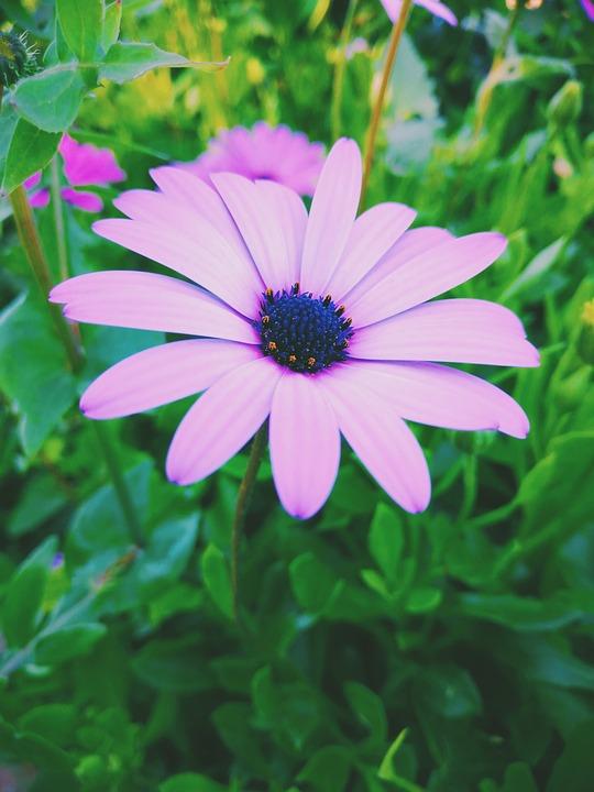 Flower, Purple, Nature, Photography