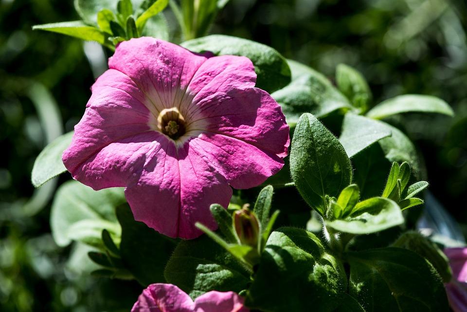 Flower, Blossom, Bloom, Pink, Flora, Plant, Spring