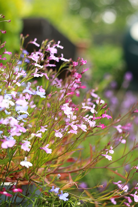 Flowers, Garden, Flower, Summer, Nature, Pink, Spring