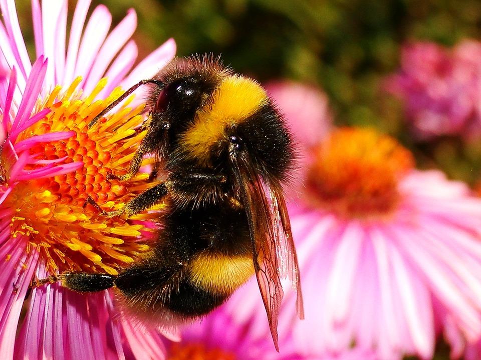 Nature, Flower, Plant, Summer, Apiformes, Animals
