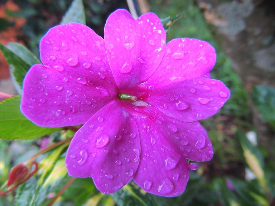 Flower, Nature, Chinese, Flowers, Plant, Beautiful