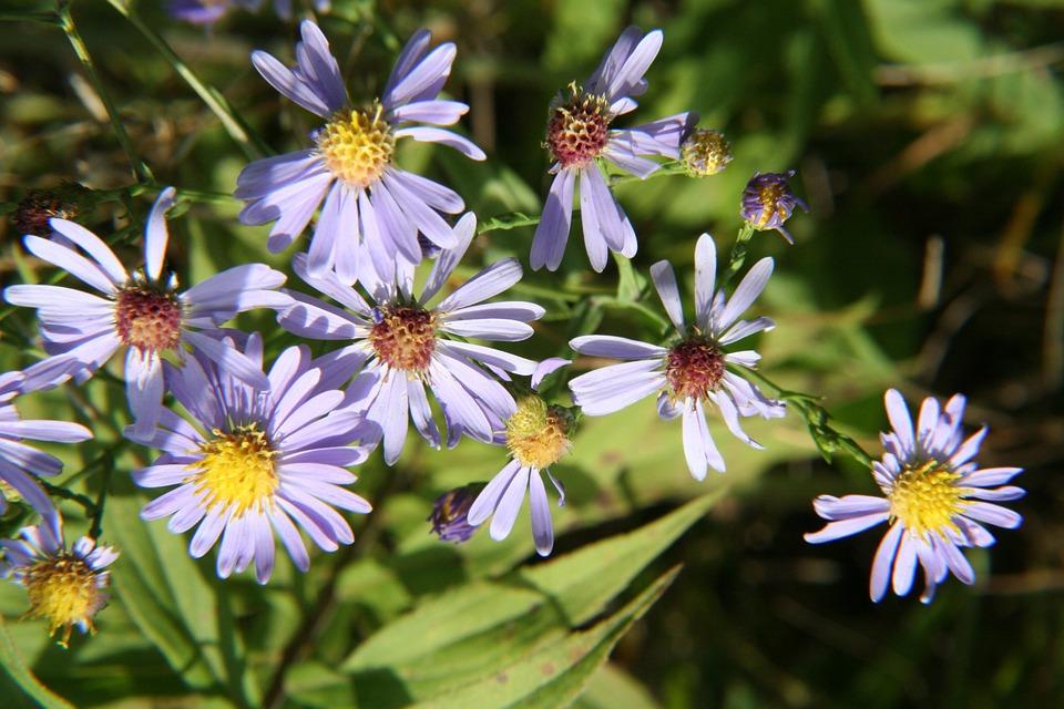 Flower, Petals, Bloom, Blossom, Nature, Plant, Flora
