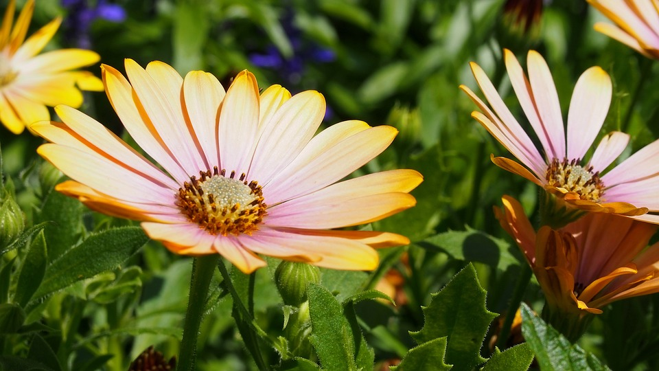 Free photo flower plant blooms macro nature spring max pixel flower blooms spring nature plant macro mightylinksfo