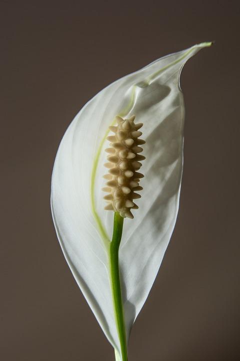Flower, White, Blossom, Bloom, White Flower, Plant
