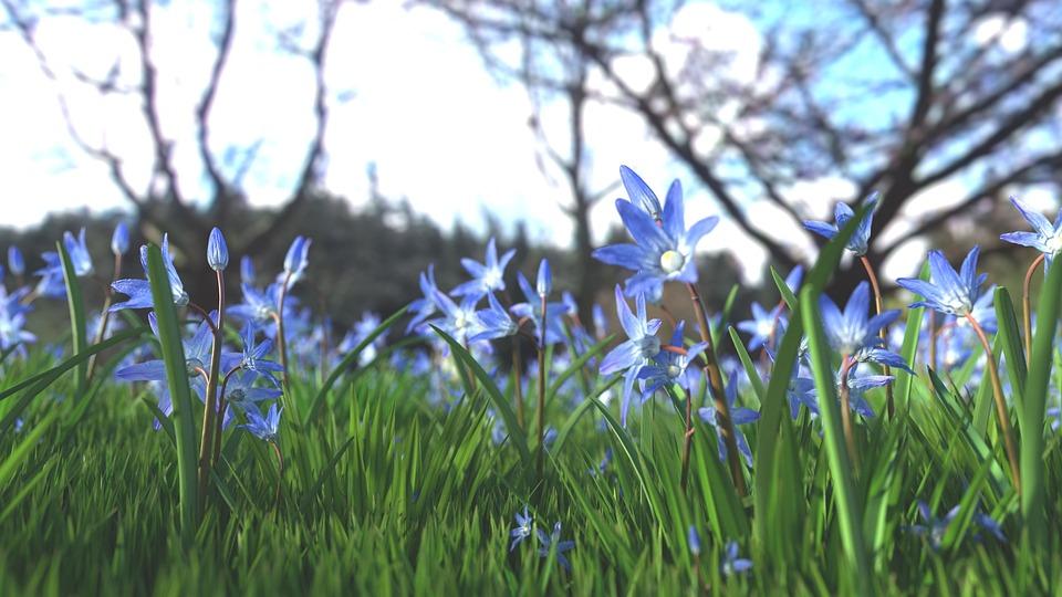 Flower, Blue Flower, Nature, Plant, Blue
