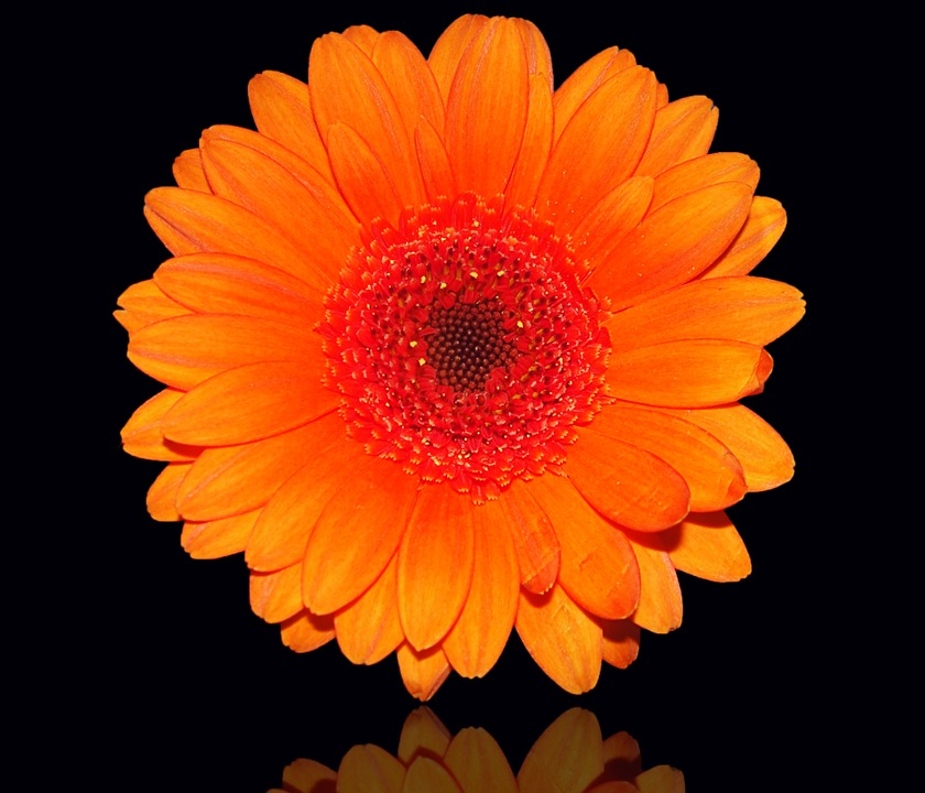 Flower, Petal, Color, Plant, Black Background