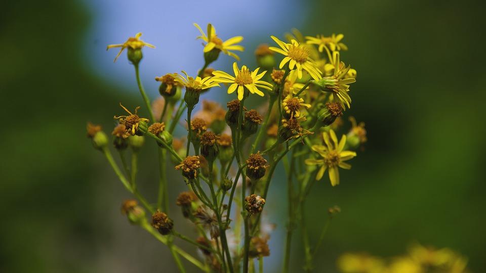 Flower, Flowers, Summer, Yellow, Nature, Plant, Flora