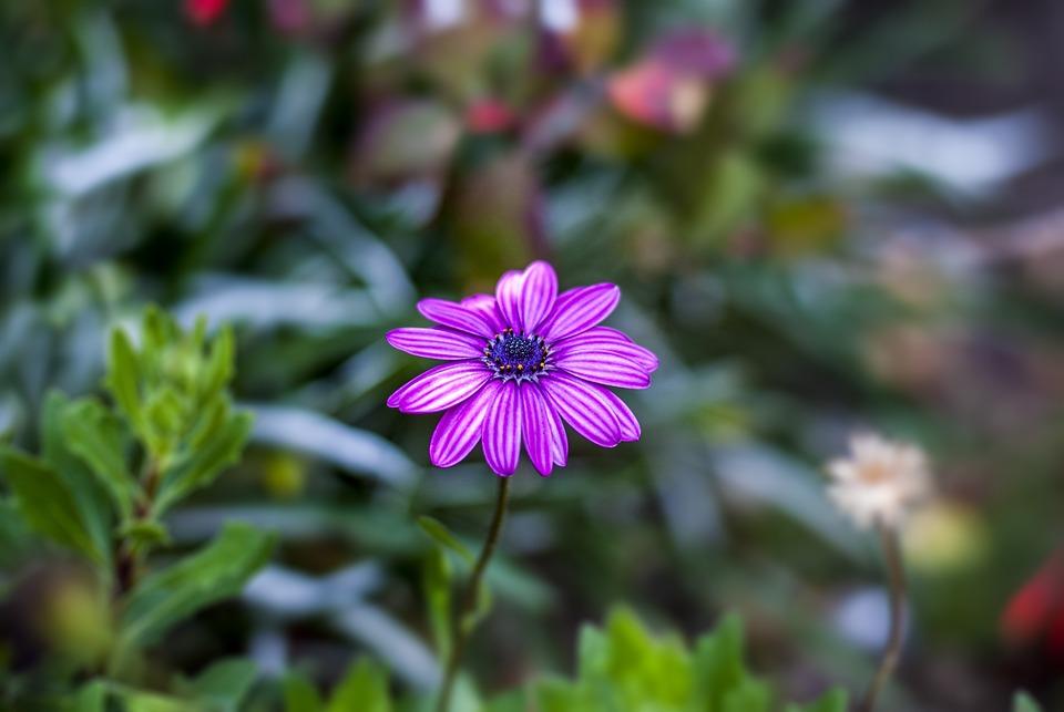 Flower Gérbel, Flower, Plant, Nature