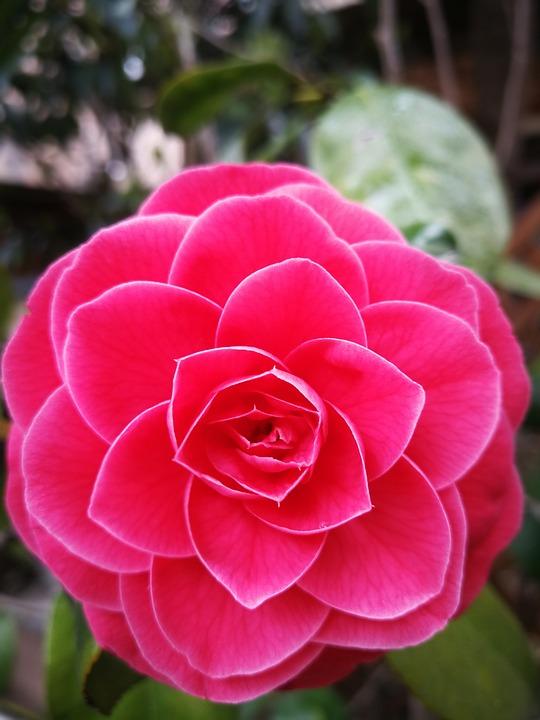 Nature, Flower, Plant, Leaf, Flower's
