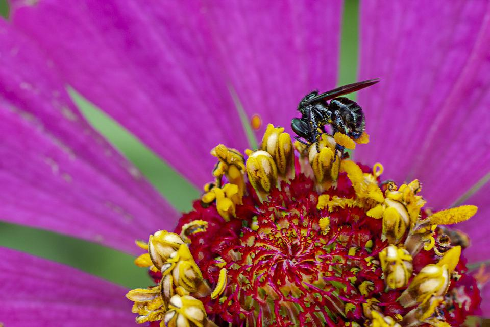 Flower, Fly, Insect, Plant, Flora