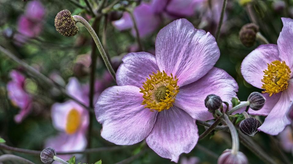 Flower, Nature, Plant, Garden, Flowers