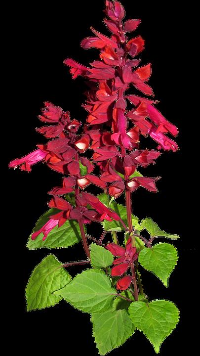 Flower, Red, Stem, Plant, Garden