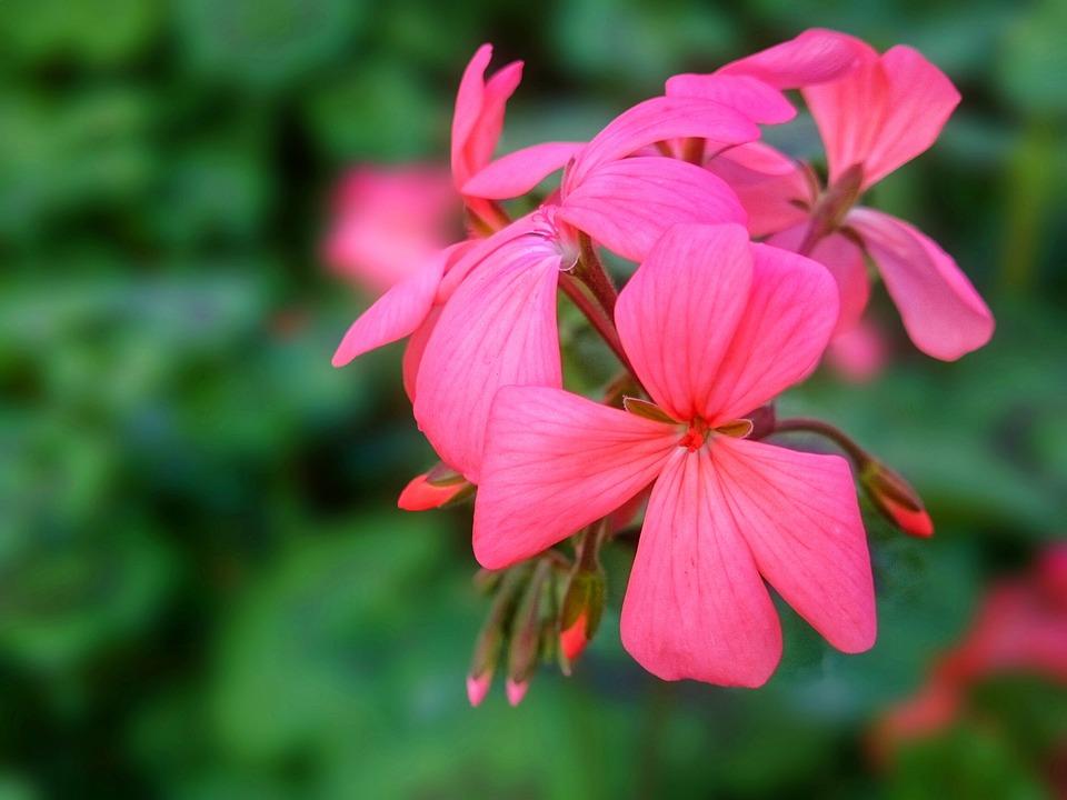 Flower, Nature, Garden, Plant, Summer, Leaf