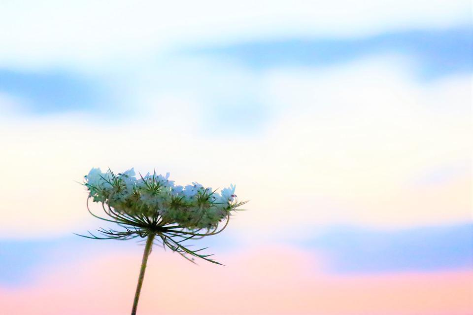 Flower, Nature, Plant, Spring, Blooming, Sky, Fund