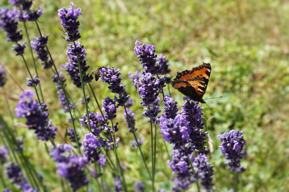 Flower, Butterfly, Grass, Blossom, Bloom, Nature, Plant