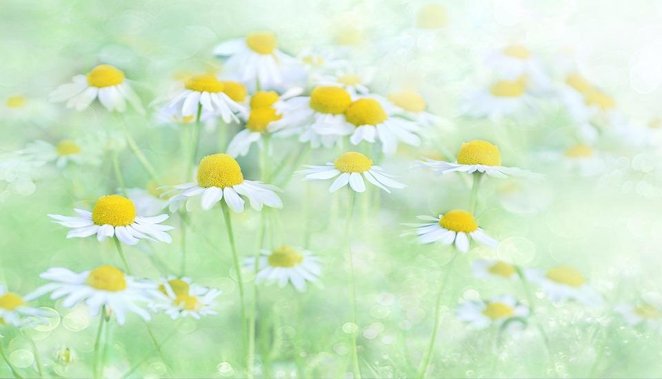 Nature, Flower, Plant, Summer, Background, Floral