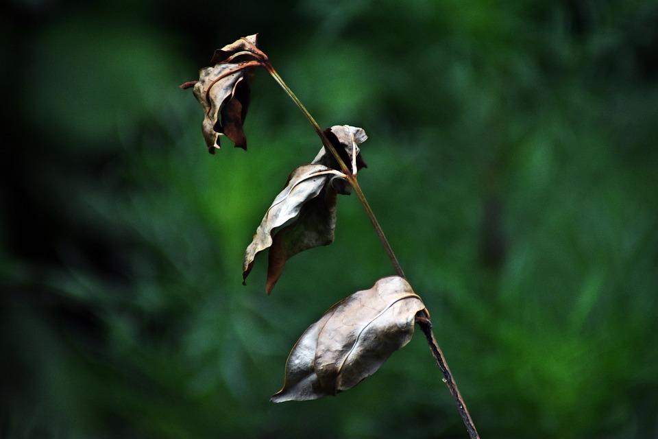 Plant, Nature, Dry, Background, Garden, Flower, Flora