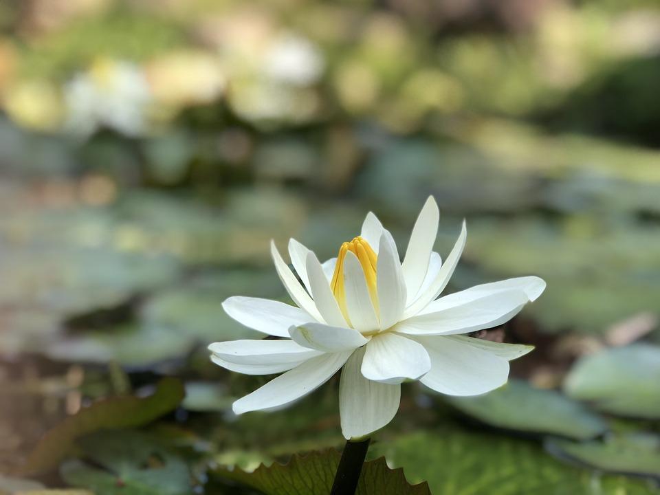 Nature, Flower, Plant, Foliage, Summer, White