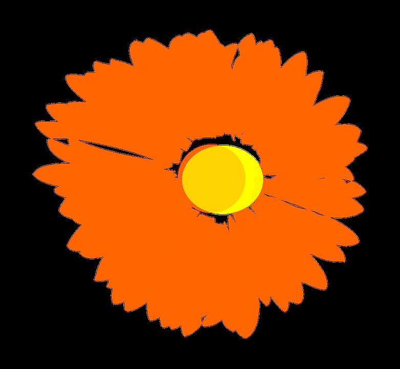Flower, Orange, Plant
