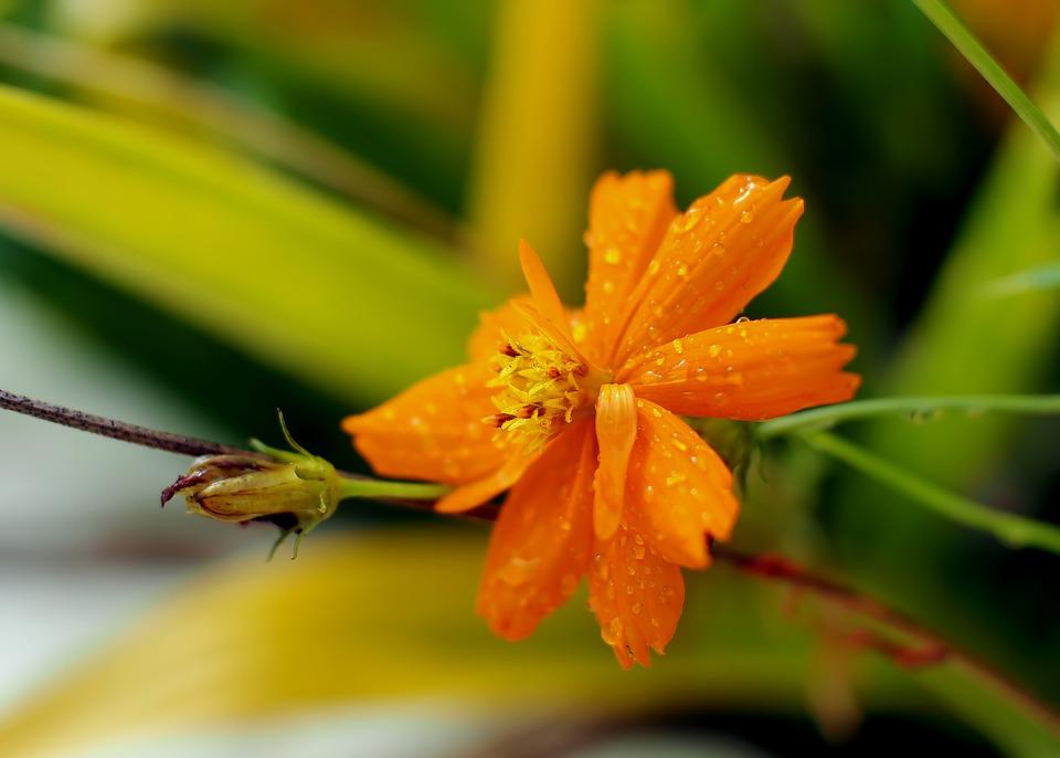 Flower, Plant, Wet, Outdoor