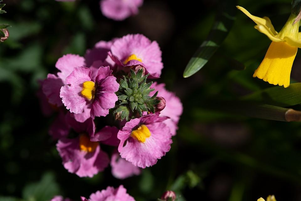 Flowers, Flower, Pink, Garden, Spring, Plant